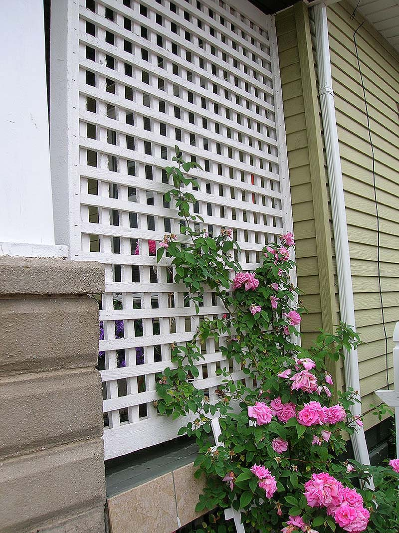 wood square lattice porch rose trellis by Elyria Fence